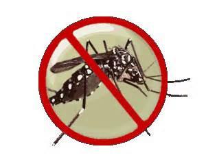 Dengue - Aedes mosquito
