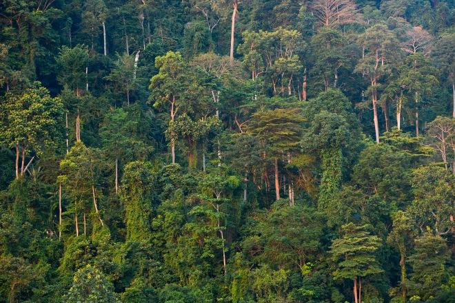 Berembun Forest reserve