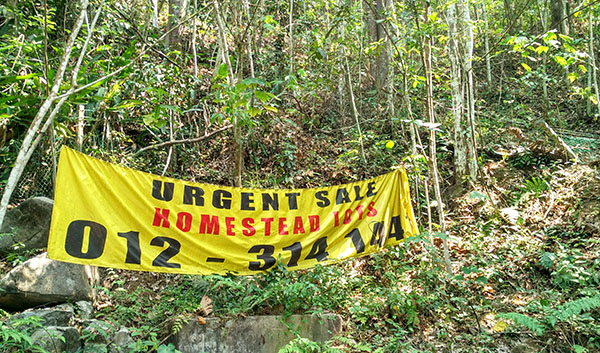 Developer of Pantai Hill Orchard Resort - advertising Homestead land for sale